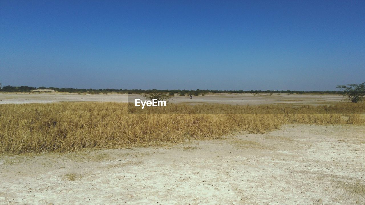 nature, landscape, tranquility, field, day, tranquil scene, no people, outdoors, scenics, beauty in nature, clear sky, grass, sky