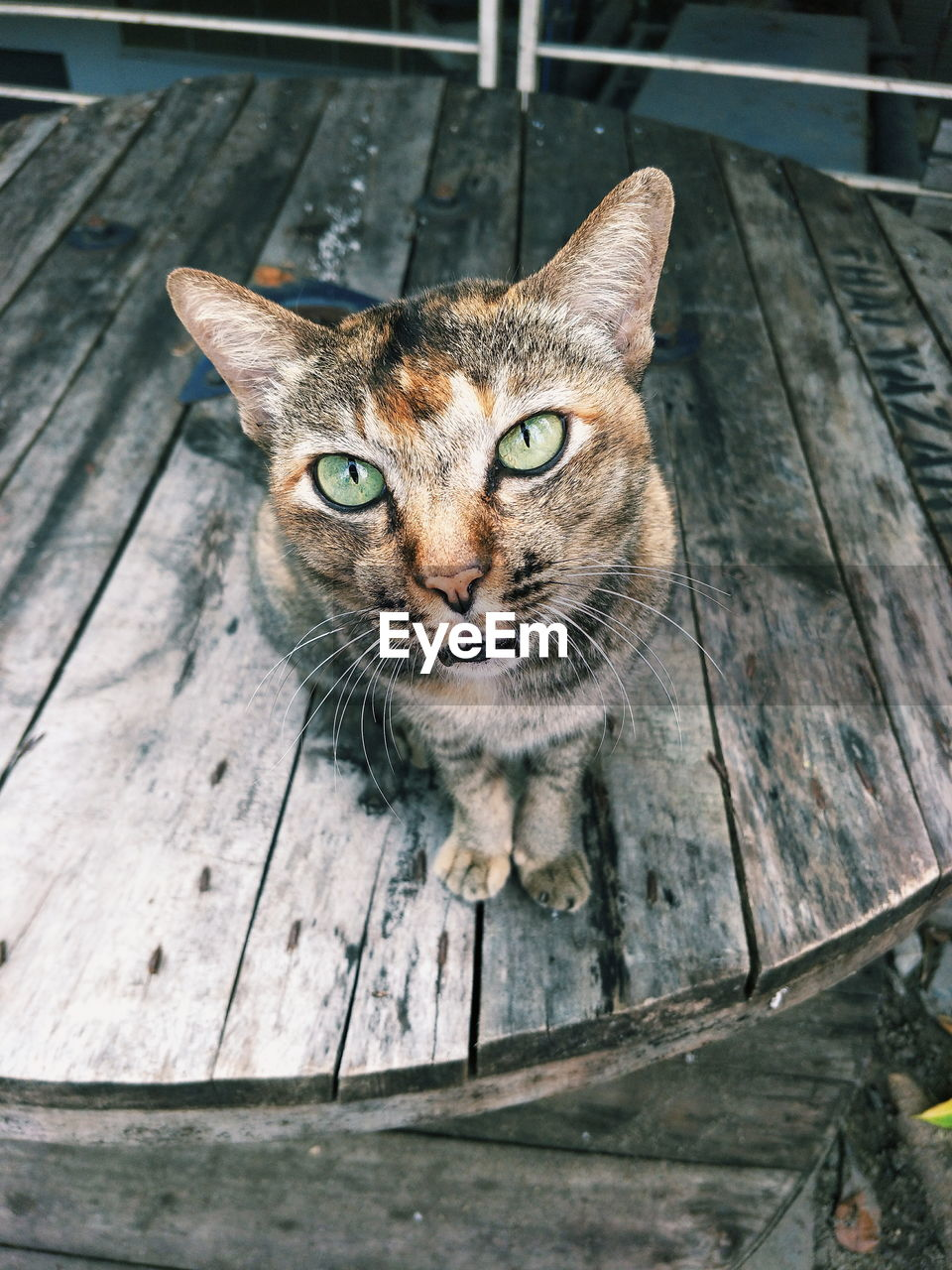 cat, domestic cat, one animal, pets, animal themes, feline, domestic, mammal, animal, domestic animals, portrait, looking at camera, wood - material, vertebrate, no people, day, whisker, high angle view, close-up, focus on foreground, animal head, tabby