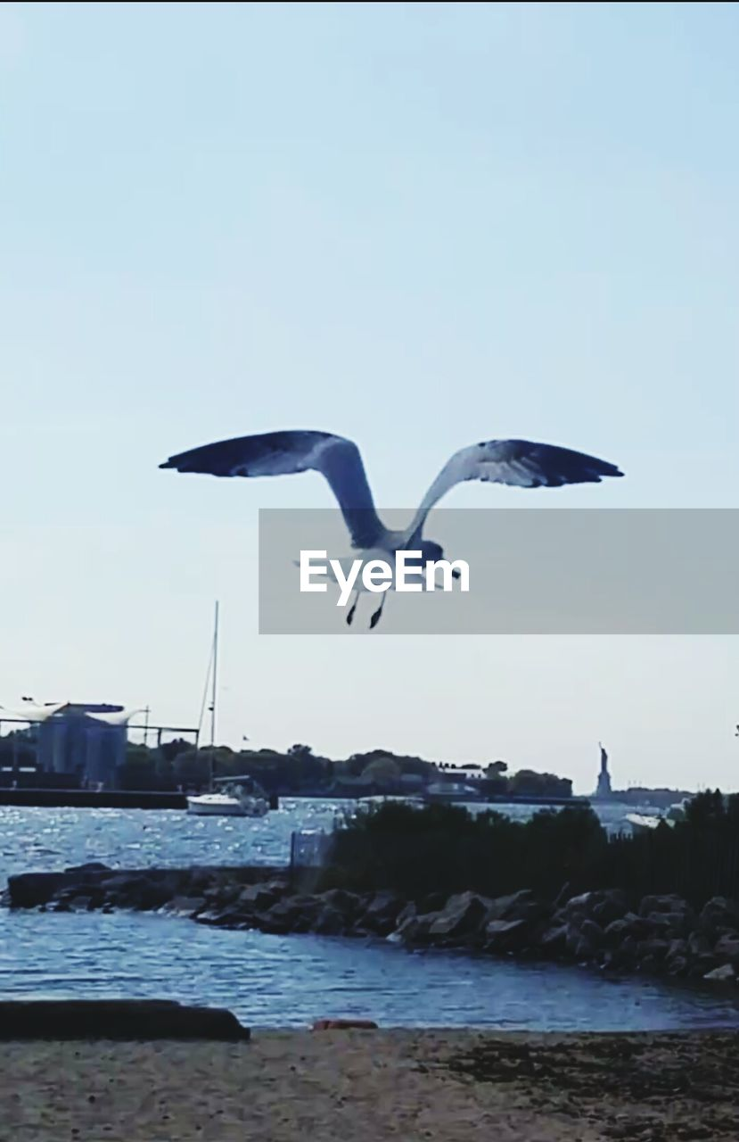 flying, bird, animals in the wild, spread wings, animal themes, mid-air, water, nature, day, outdoors, sky, no people, sea, clear sky, animal wildlife, seagull, beauty in nature