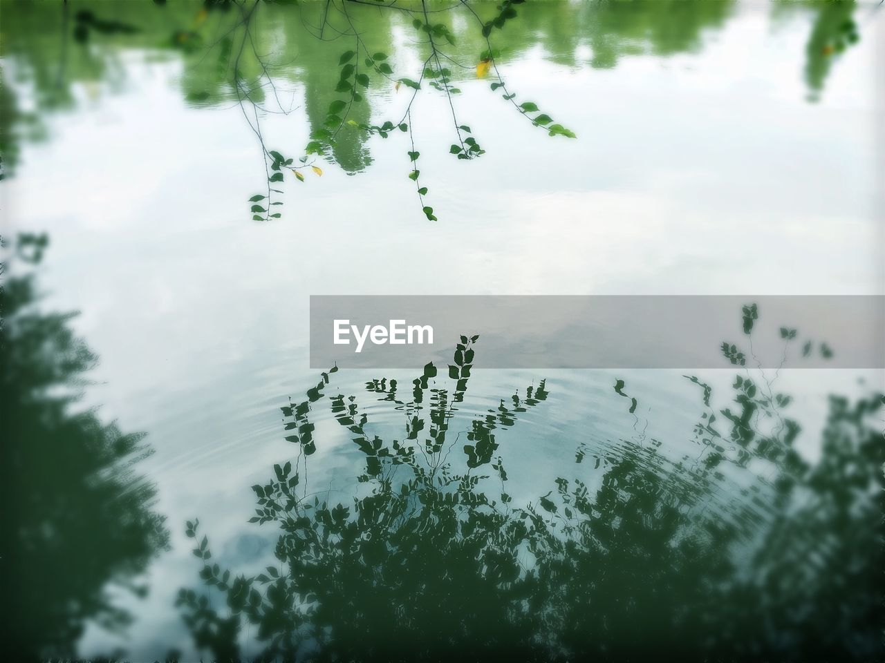 water, nature, reflection, no people, tree, beauty in nature, day, outdoors, lake, growth, tranquility, animals in the wild, plant, animal themes, sky, swimming, freshness, close-up