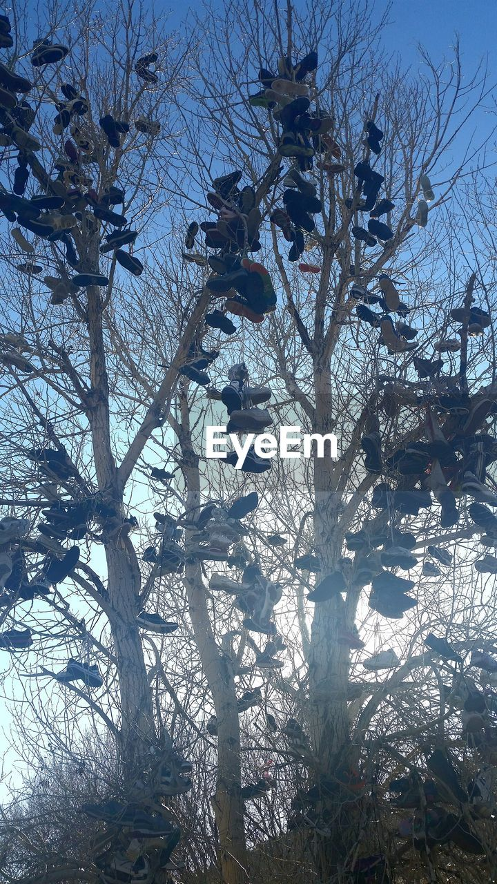 Shoes Hanging From Bare Trees