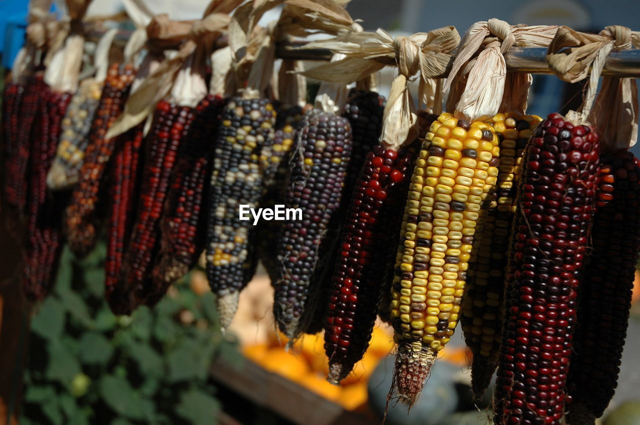 Close-up of corns for sale in market