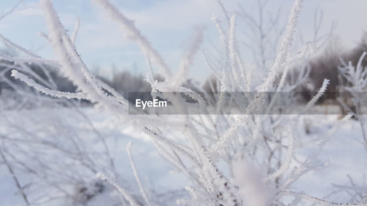 winter, snow, cold temperature, white color, nature, no people, close-up, frozen, weather, beauty in nature, plant, day, outdoors