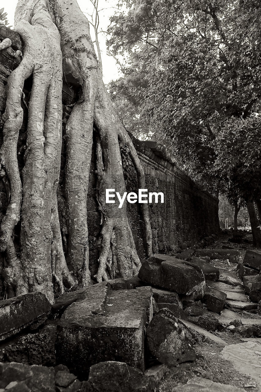 tree, history, the past, plant, ancient, no people, architecture, day, solid, built structure, old ruin, old, spirituality, religion, nature, stone material, belief, sculpture, place of worship, ancient civilization, outdoors, ruined, archaeology