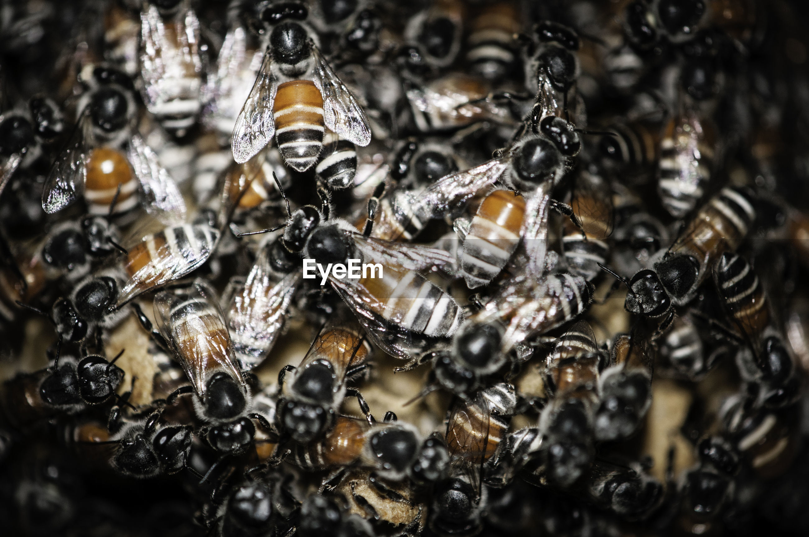 Close-up of beehive