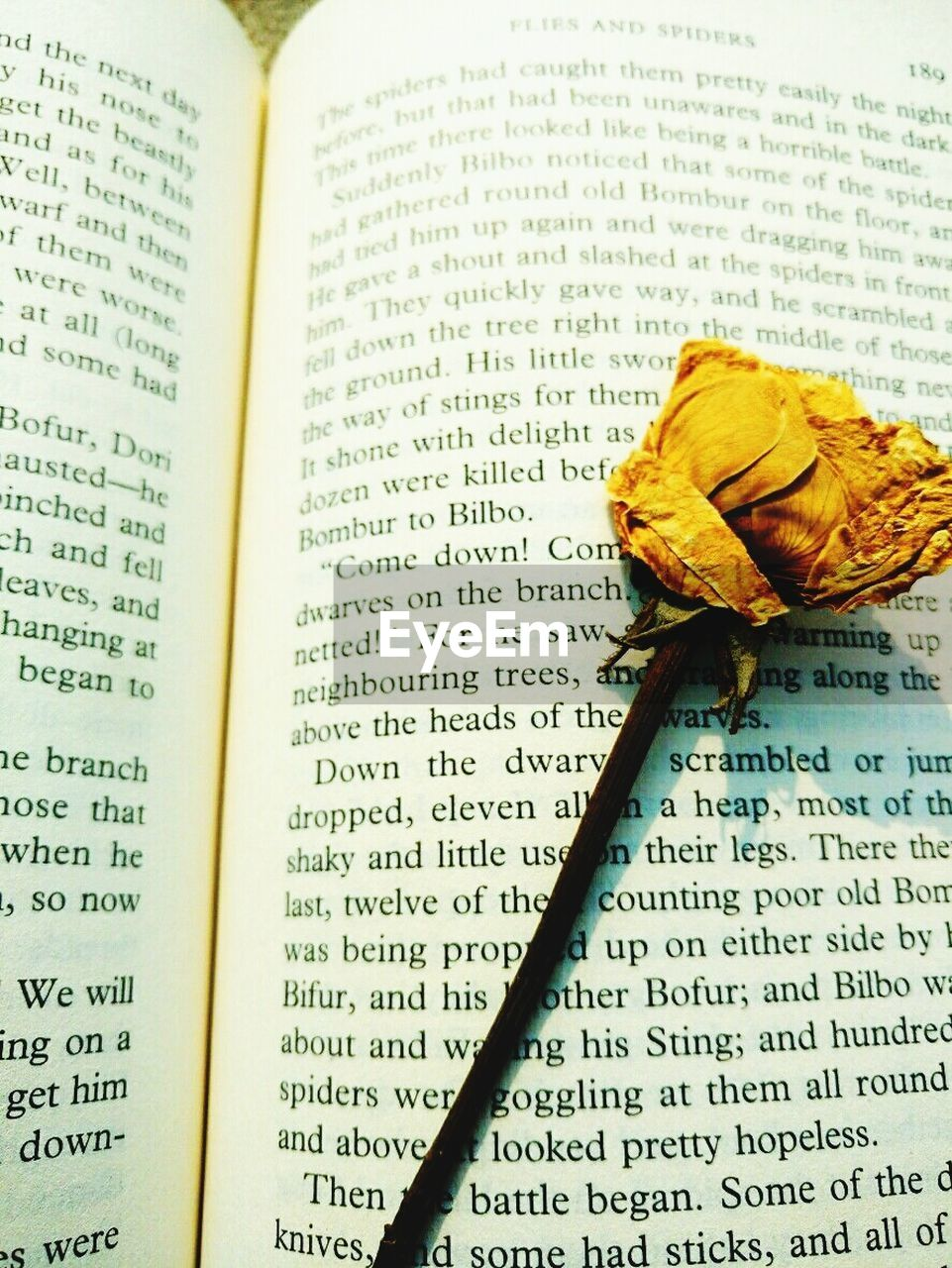 text, book, spirituality, communication, religion, yellow, no people, education, literature, paper, close-up, flower, day