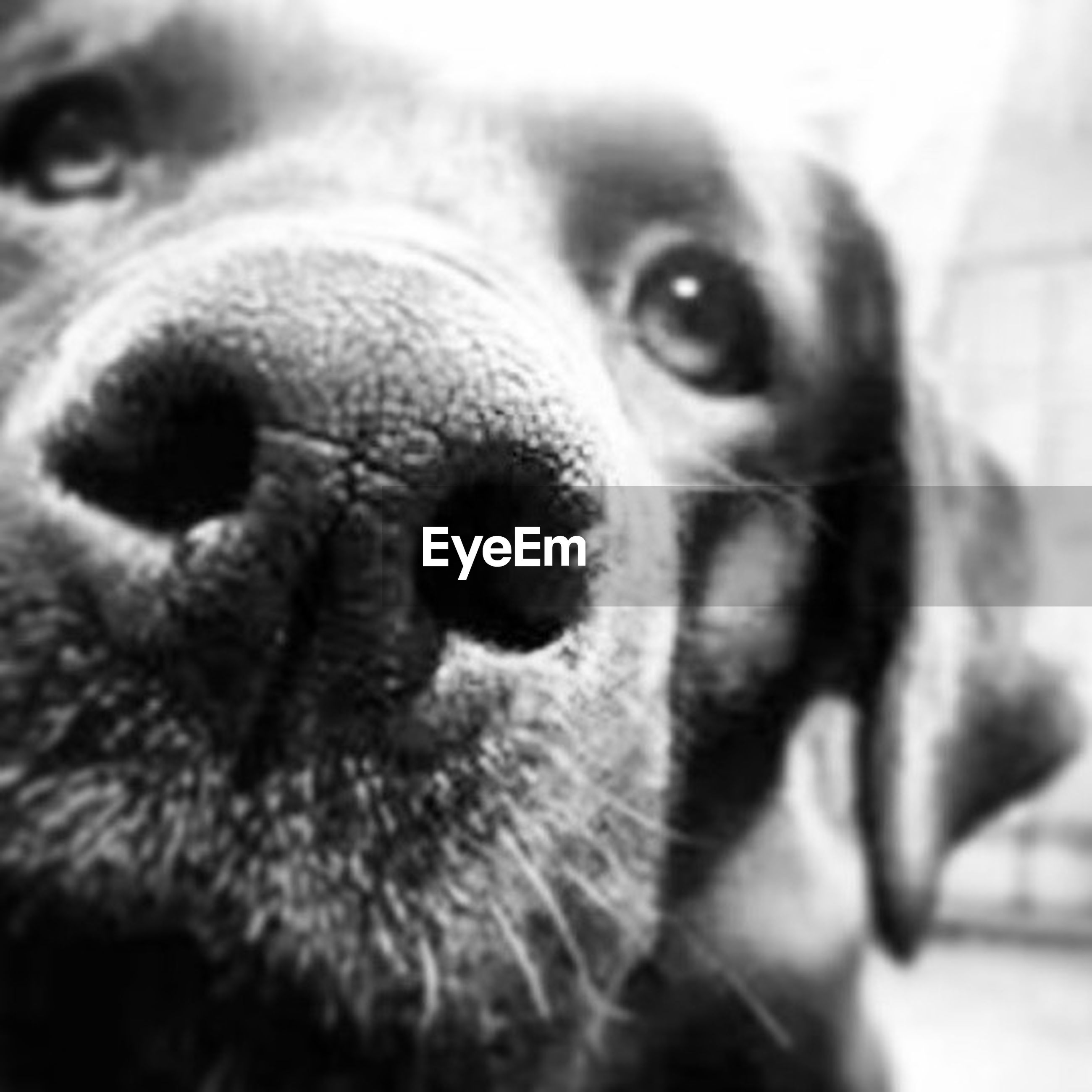 pets, domestic animals, close-up, one animal, portrait, indoors, looking at camera, animal themes, animal head, mammal, animal body part, dog, part of, focus on foreground, animal eye, selective focus, extreme close up, animal nose, snout, extreme close-up