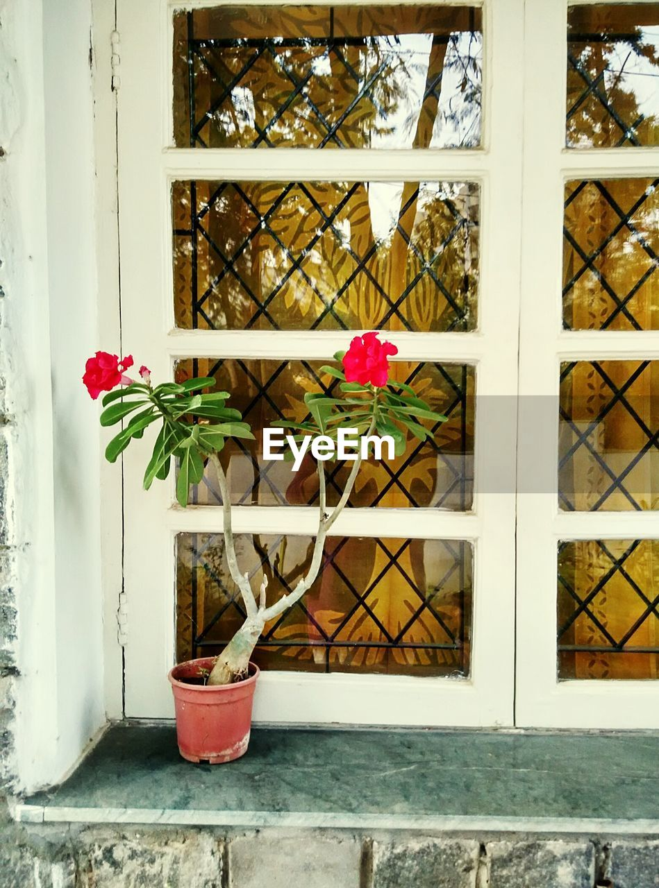 flower, potted plant, plant, growth, window, nature, no people, fragility, day, wood - material, close-up, indoors, architecture, beauty in nature, freshness