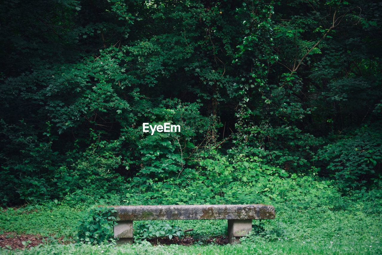 forest, foliage, plant, lush foliage, tree, growth, nature, freedom, spooky, leaf, positive emotion, green, green color, plant part, surreal, opportunity, bench, land, solitude, beauty in nature, woodland