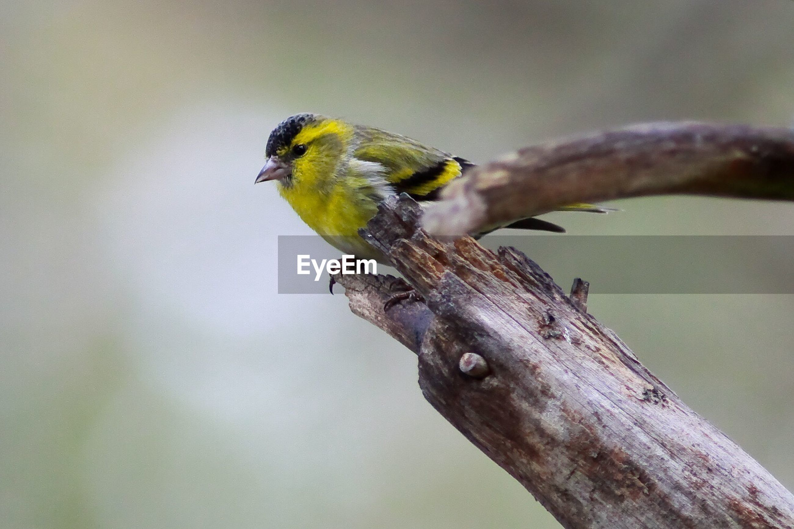 animal themes, animals in the wild, one animal, wildlife, focus on foreground, bird, close-up, perching, green color, selective focus, nature, full length, branch, side view, zoology, outdoors, no people, day, beauty in nature, two animals