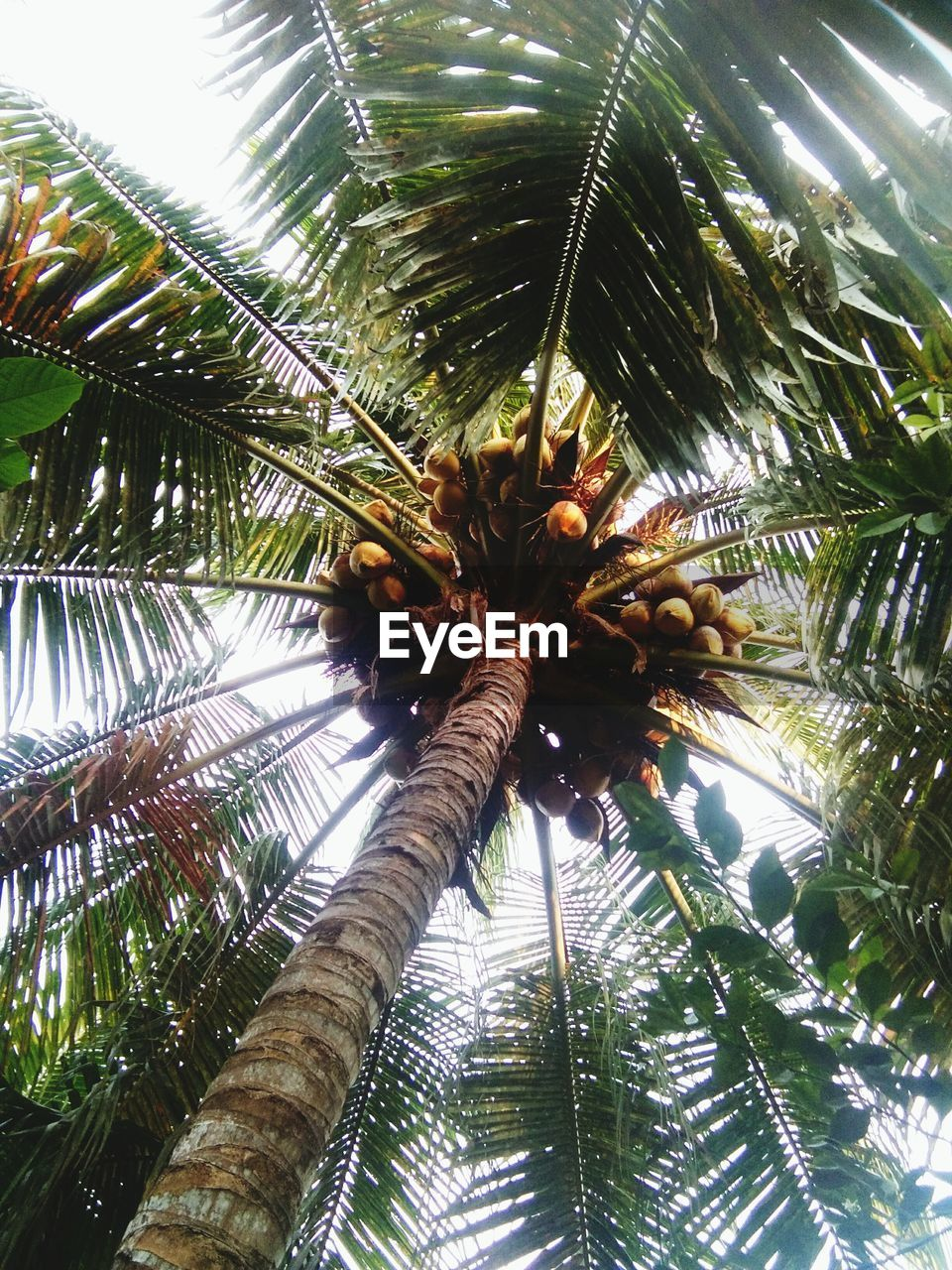 tree, low angle view, palm tree, plant, tropical climate, growth, leaf, nature, day, no people, plant part, beauty in nature, green color, palm leaf, outdoors, tree trunk, tranquility, trunk, sunlight, branch, coconut palm tree, tropical tree, directly below