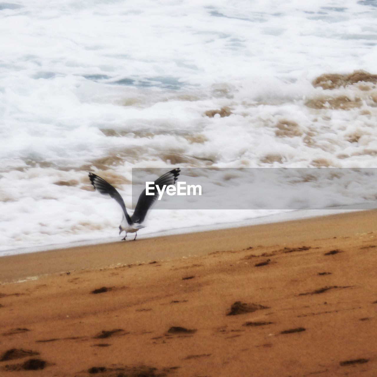 bird, animal themes, nature, sand, animals in the wild, water, one animal, beach, day, animal wildlife, motion, outdoors, sea, beauty in nature, no people, flying, scenics, spread wings, wave, sky