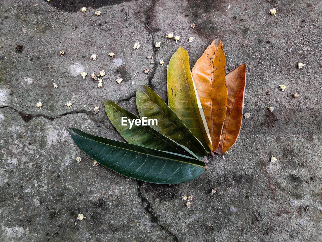 HIGH ANGLE VIEW OF LEAF ON STREET