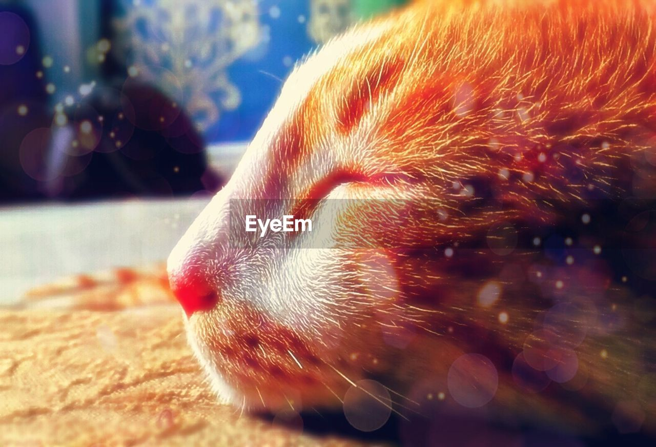 one animal, animal themes, close-up, animals in the wild, focus on foreground, no people, pets, domestic animals, day, mammal, indoors, nature, undersea
