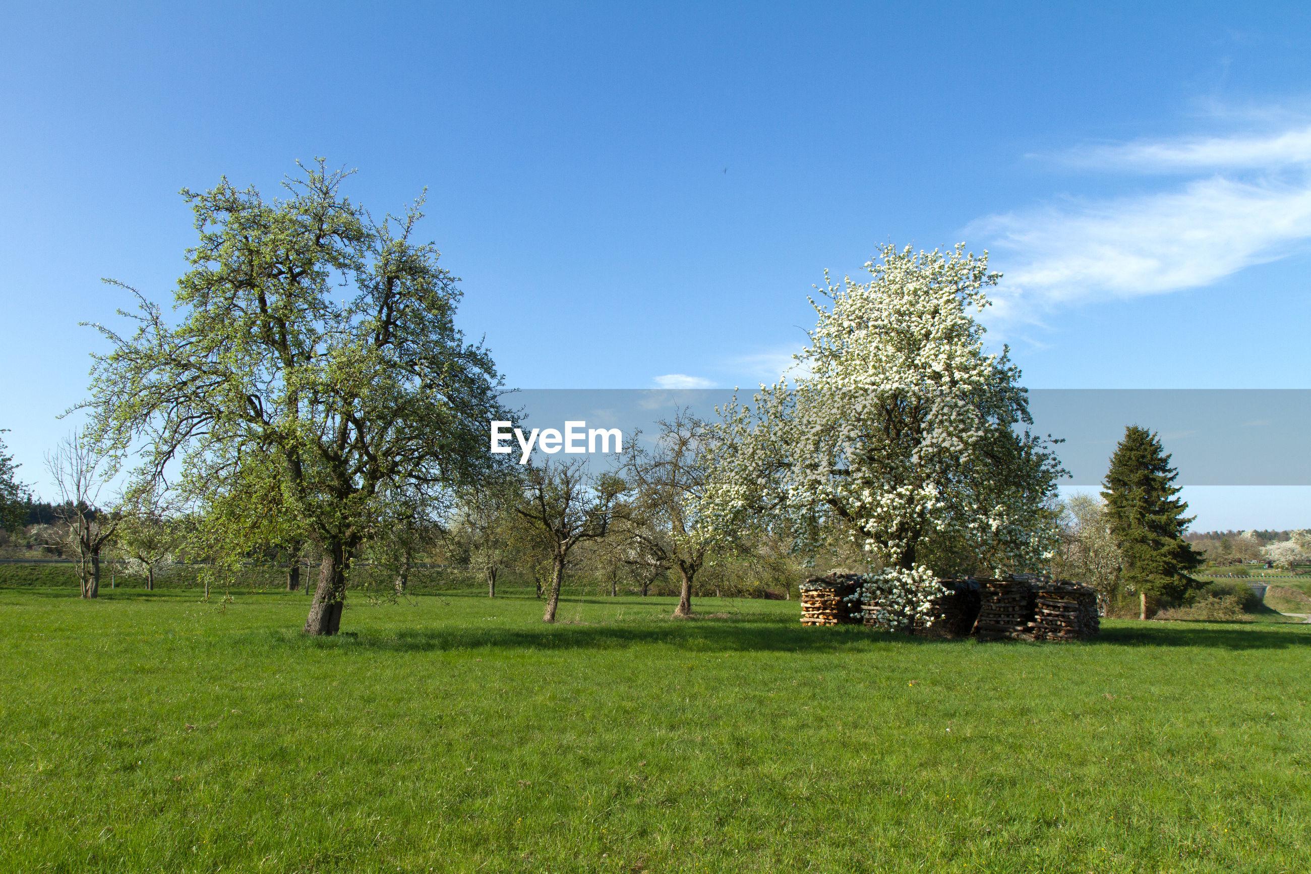 TREES GROWING IN FIELD AGAINST SKY