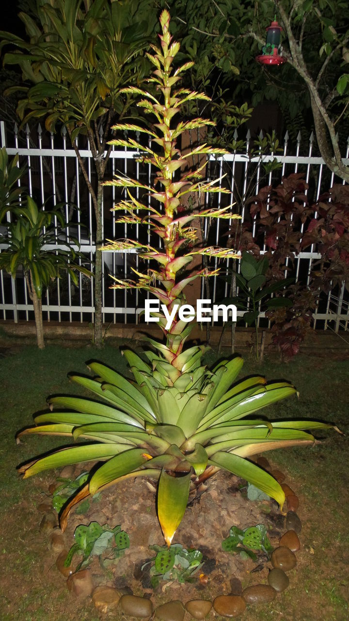 growth, plant, leaf, green color, no people, banana tree, nature, banana, freshness, outdoors, day, beauty in nature, tree, flower, close-up, fragility