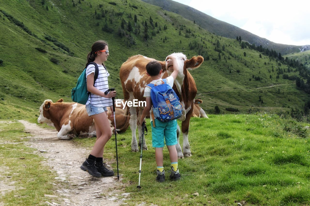 Siblings standing by cattle on mountain