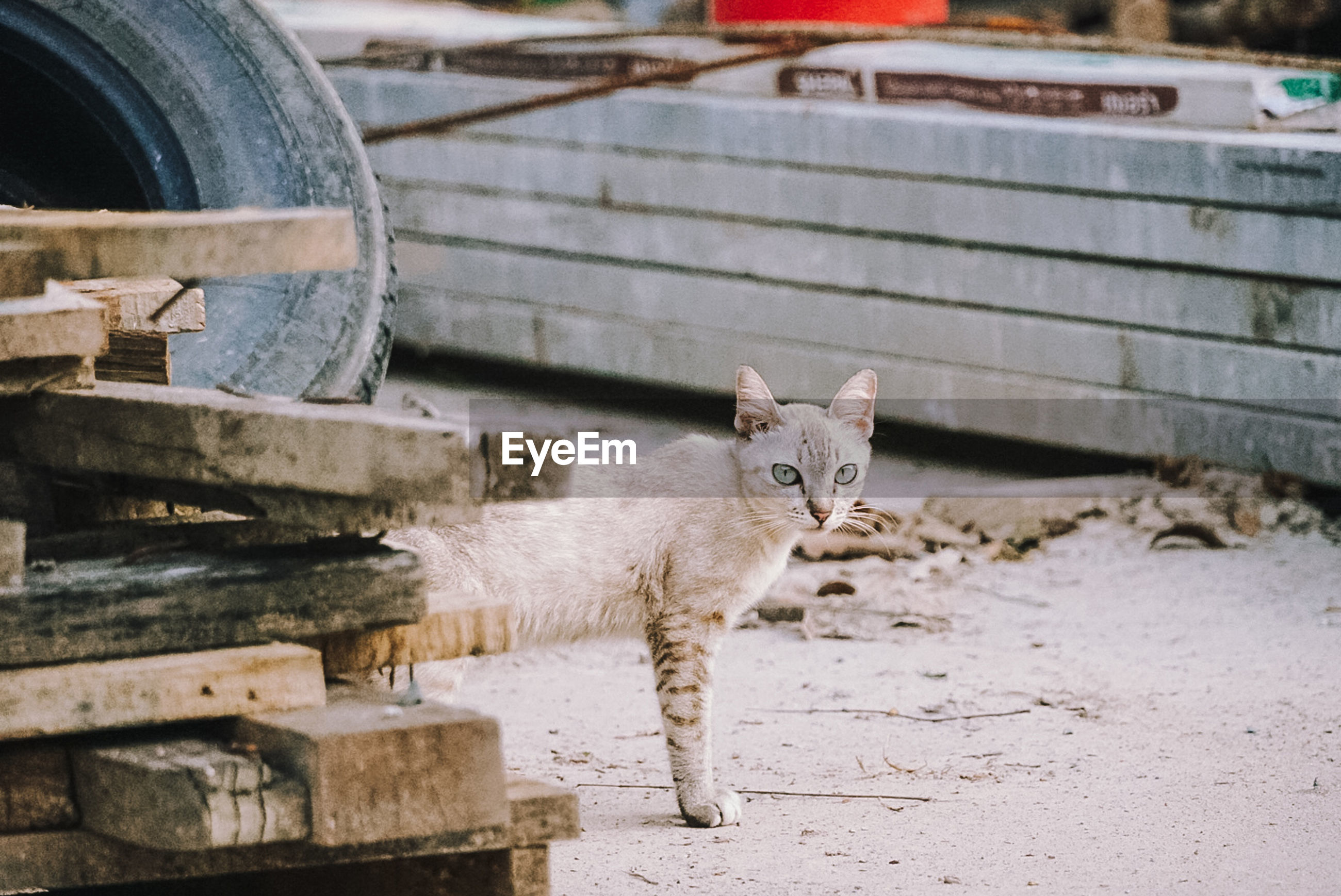 PORTRAIT OF CAT STANDING ON COBBLESTONE