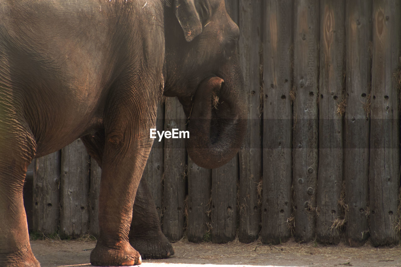 Elephant against wooden fence at zoo