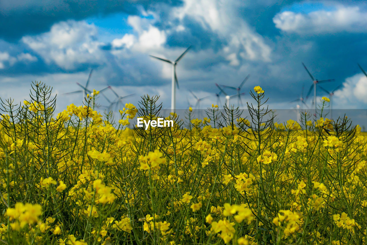 yellow, growth, plant, flower, flowering plant, beauty in nature, oilseed rape, agriculture, freshness, fragility, field, land, nature, sky, rural scene, vulnerability, crop, fuel and power generation, landscape, environment, no people, springtime, outdoors