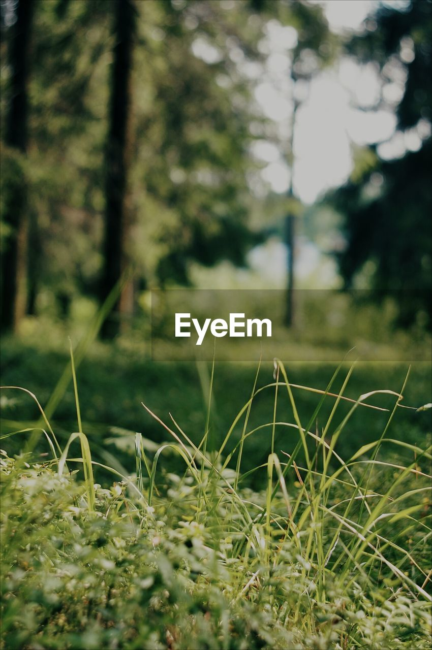 plant, growth, land, selective focus, beauty in nature, day, grass, nature, no people, tranquility, field, green color, tree, focus on foreground, close-up, outdoors, tranquil scene, forest, environment, landscape, blade of grass