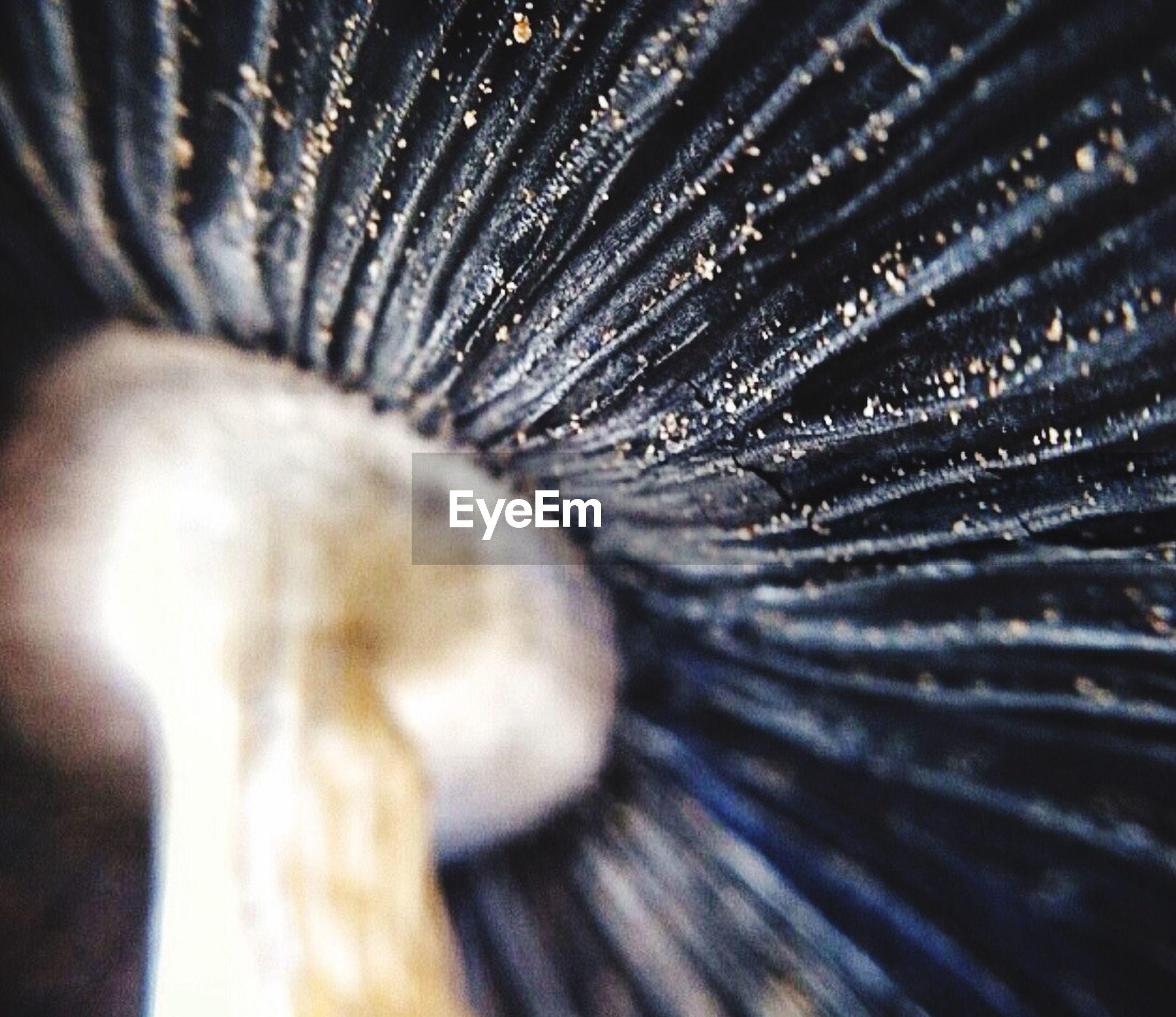 Detail shot of mushroom
