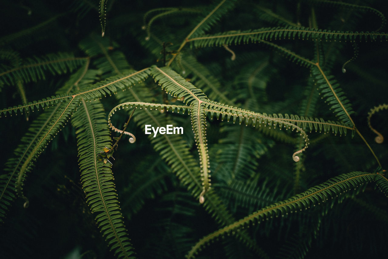 Close-Up Of Ferns Growing In Forest At Night