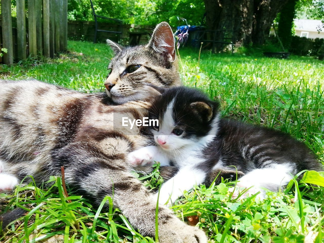 animal themes, domestic cat, domestic animals, mammal, grass, pets, feline, cat, green color, relaxation, day, no people, outdoors, plant, nature, young animal, lying down, growth, togetherness, close-up