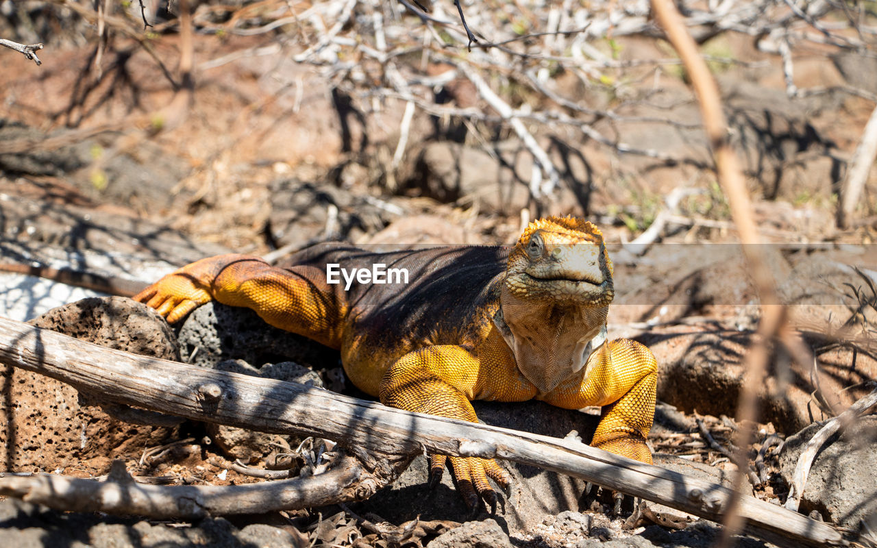 animal, animal themes, animal wildlife, animals in the wild, nature, one animal, vertebrate, tree, land, day, no people, mammal, field, plant, focus on foreground, sunlight, outdoors, selective focus, reptile, wood - material, iguana