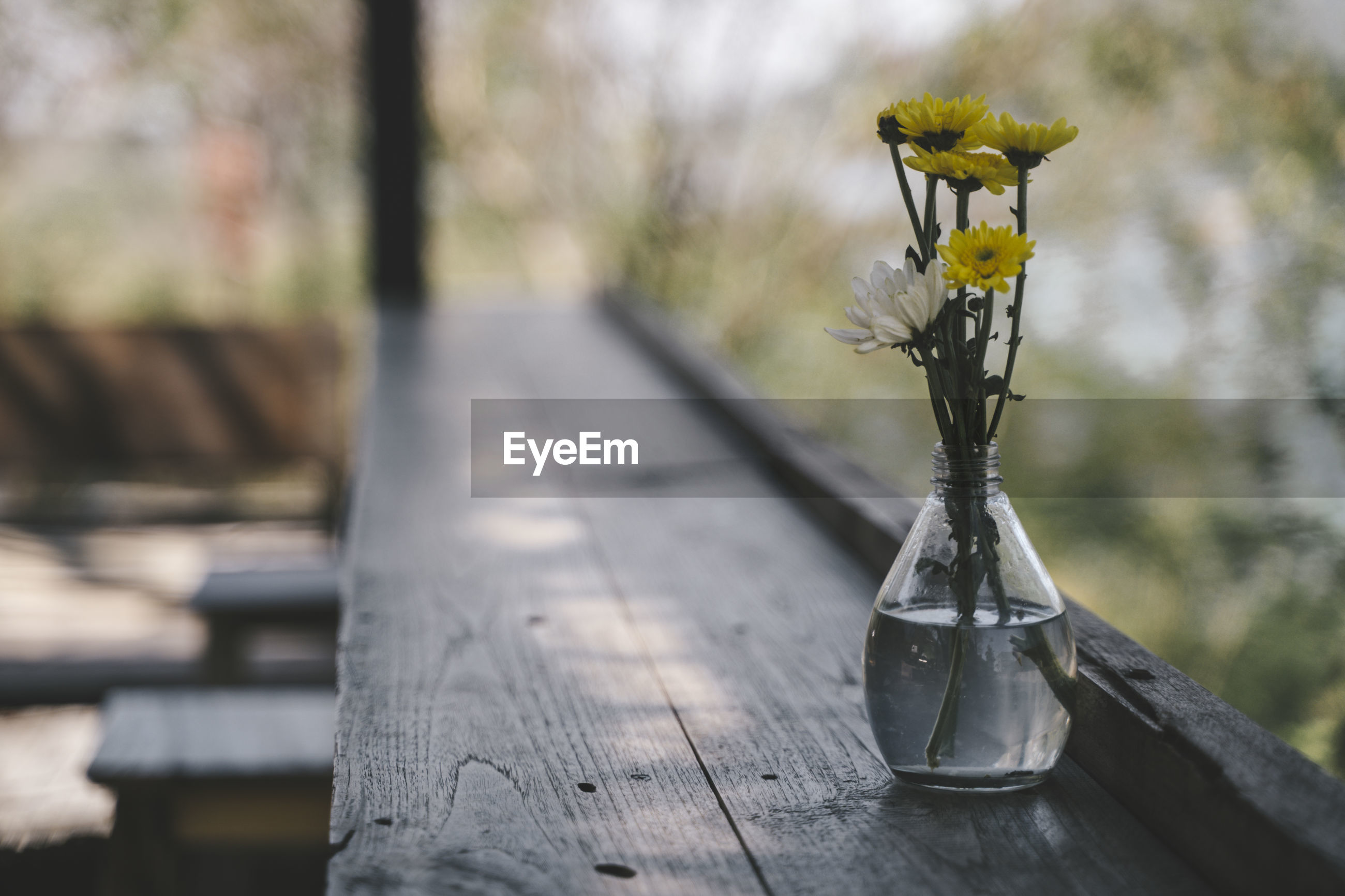 CLOSE-UP OF YELLOW FLOWER ON TABLE AT PARK