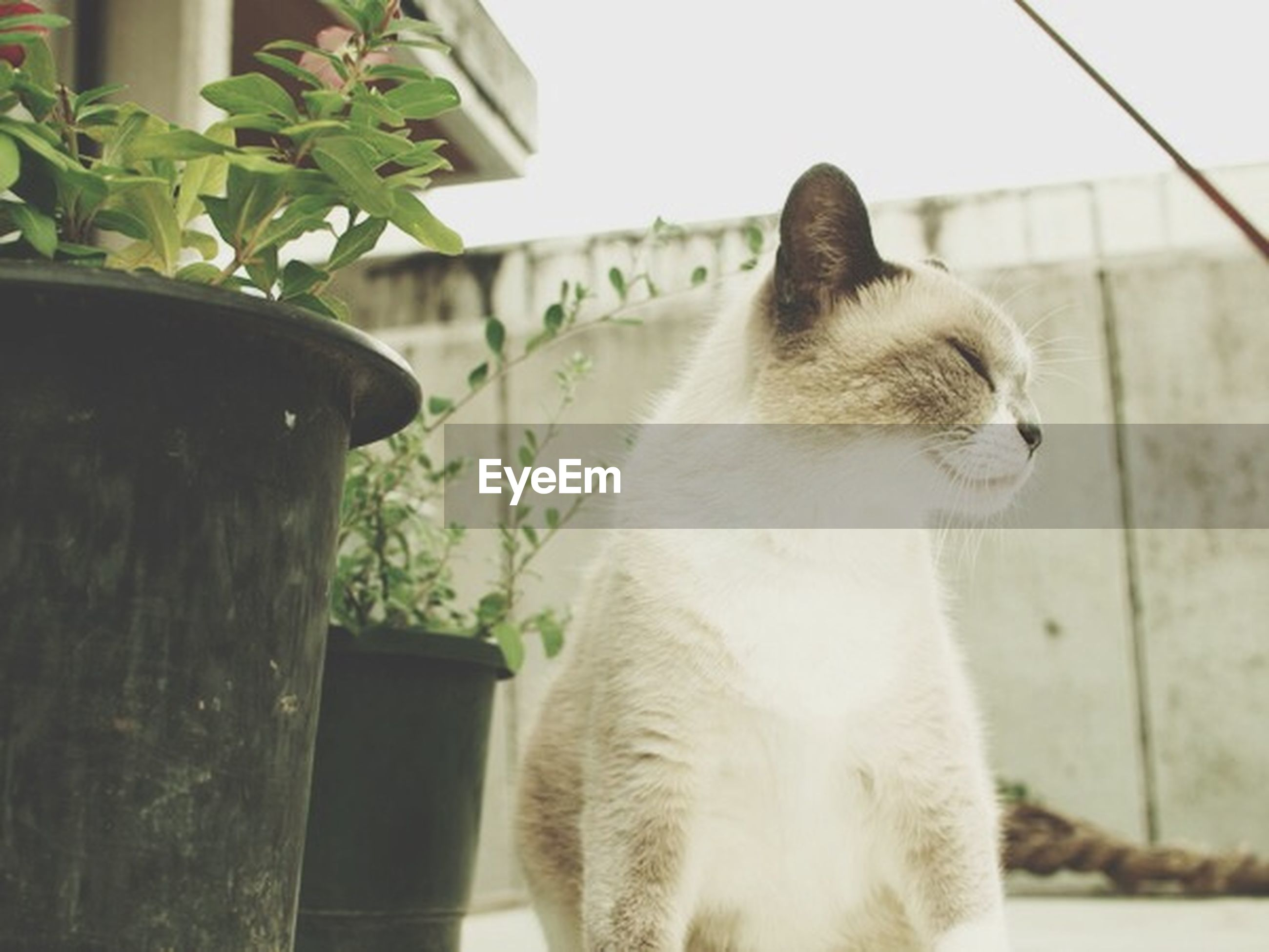 animal themes, one animal, mammal, domestic animals, pets, domestic cat, cat, feline, close-up, focus on foreground, looking away, sitting, whisker, plant, day, potted plant, no people, relaxation, built structure, outdoors
