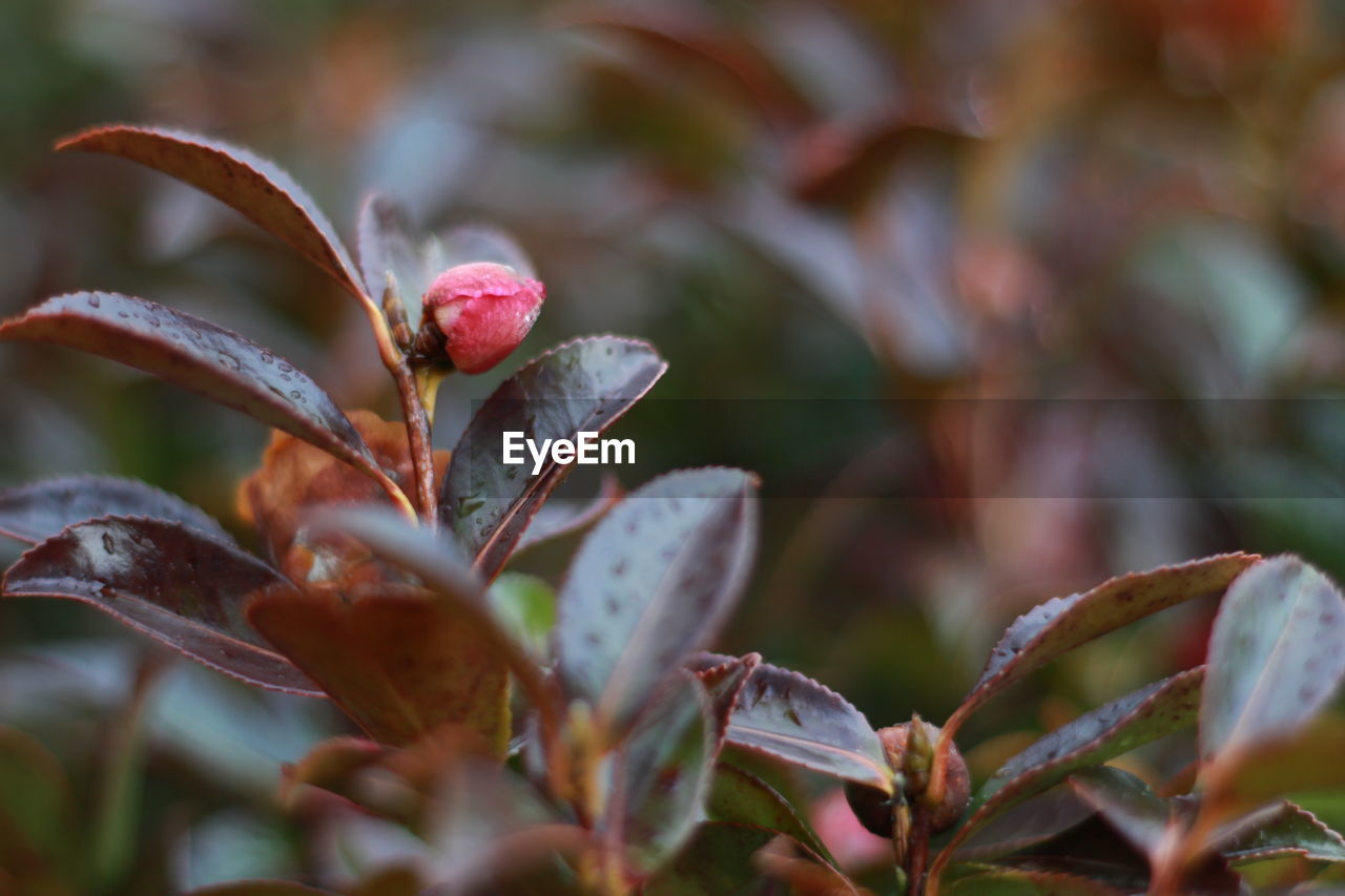 growth, nature, flower, beauty in nature, plant, outdoors, fragility, no people, close-up, day, freshness, blooming, flower head