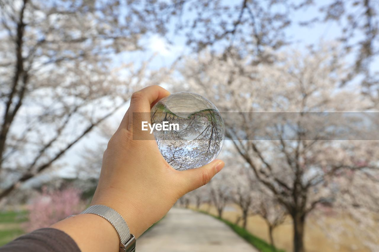 Close-Up Of Hand Holding Crystal Ball Against Tree