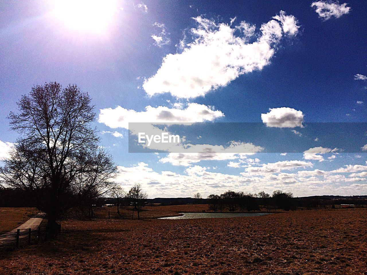 sky, tree, cloud - sky, sunlight, day, beauty in nature, no people, nature, bare tree, tranquility, landscape, outdoors, scenics