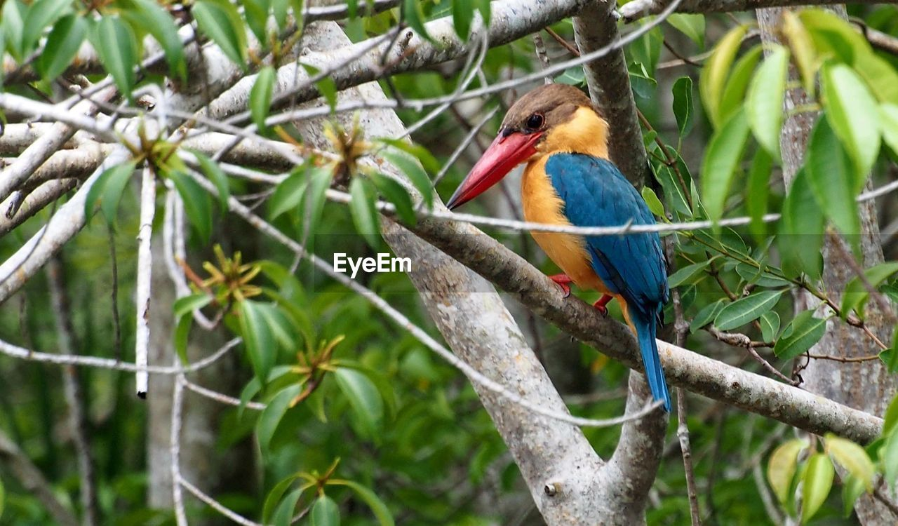 animal wildlife, animal themes, bird, animal, animals in the wild, vertebrate, one animal, perching, branch, kingfisher, tree, plant, focus on foreground, no people, nature, day, beauty in nature, outdoors, close-up, beak