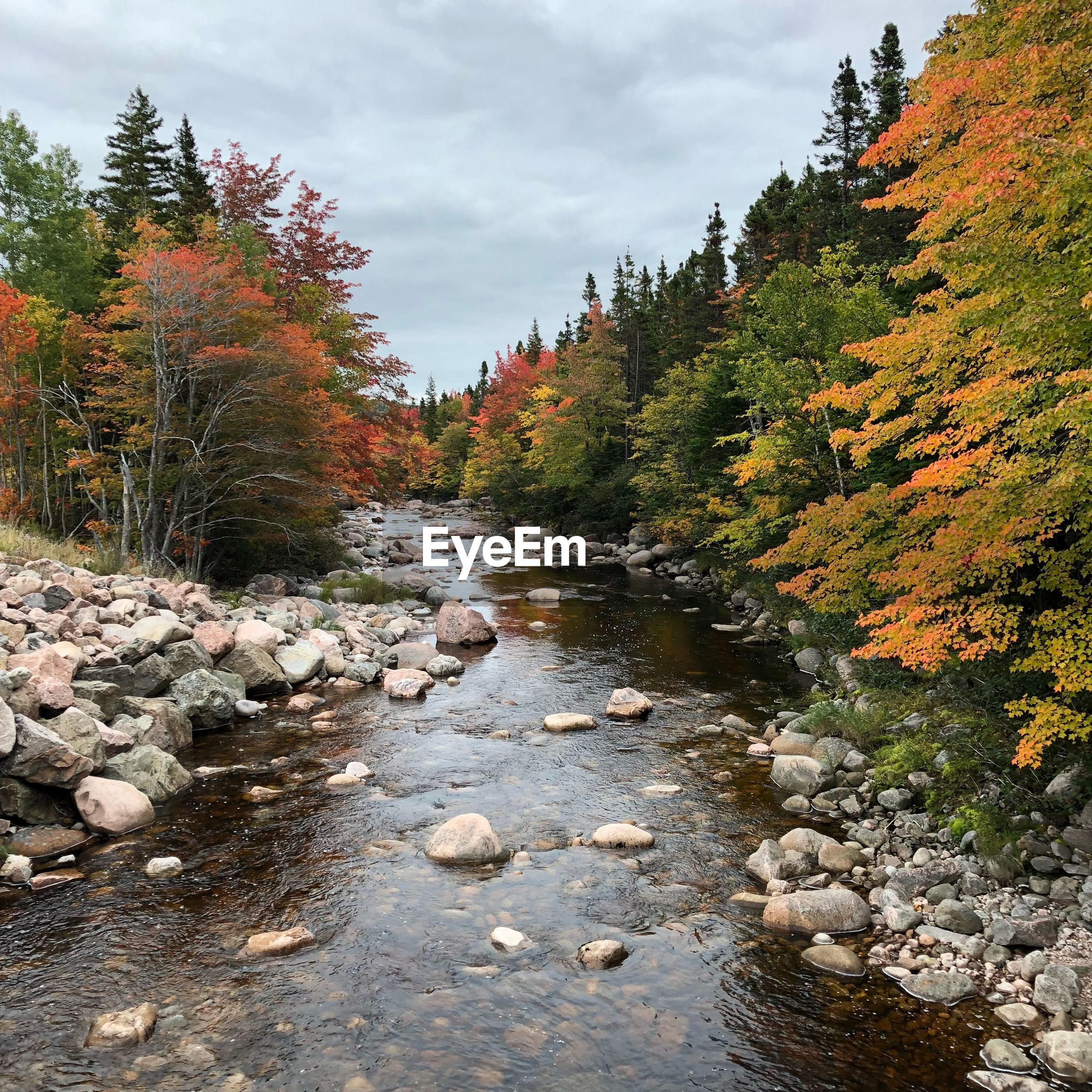 SCENIC VIEW OF RIVER STREAM AMIDST TREES