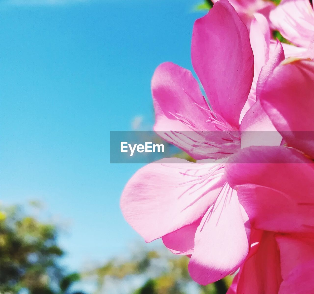 flower, petal, pink color, beauty in nature, fragility, nature, flower head, day, growth, freshness, outdoors, no people, close-up, blossom, springtime, plant, blooming, clear sky, sky