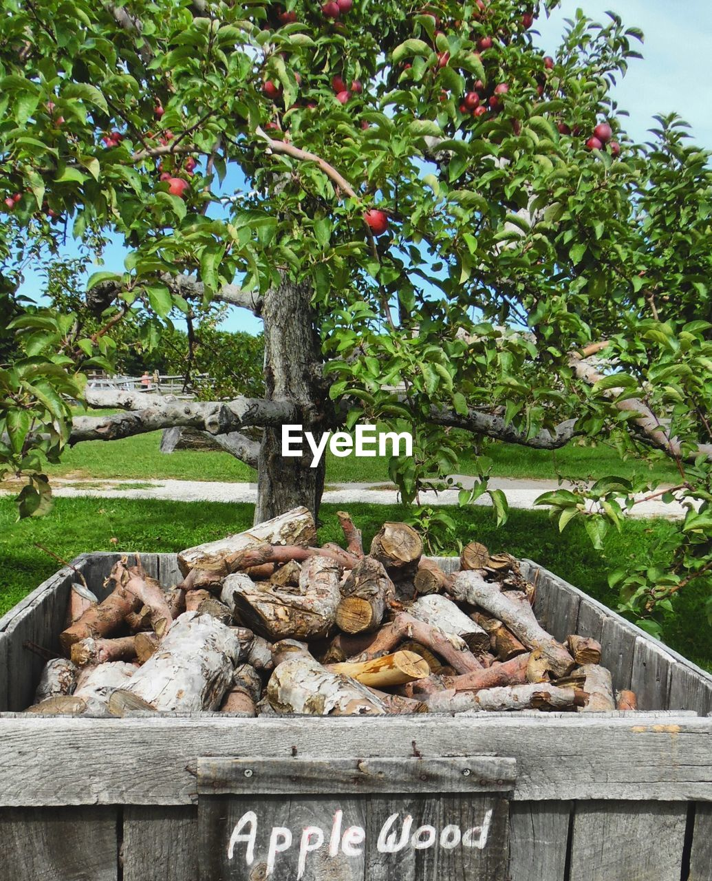 tree, plant, day, nature, text, western script, no people, growth, outdoors, wood - material, grass, communication, solid, healthy eating, food and drink, stack, stone - object, park, wood, food