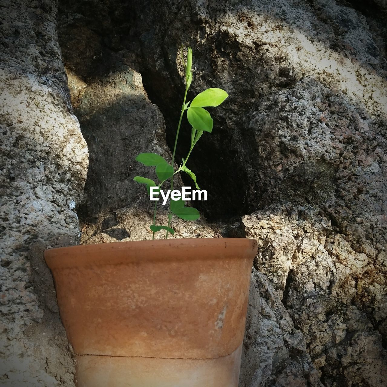 Close-up of green plant on pot