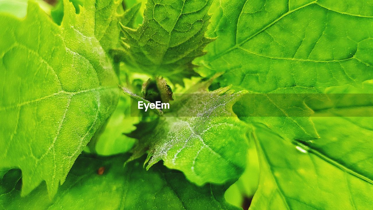 leaf, green color, growth, plant, nature, close-up, day, no people, outdoors, animal themes, fragility, freshness, beauty in nature