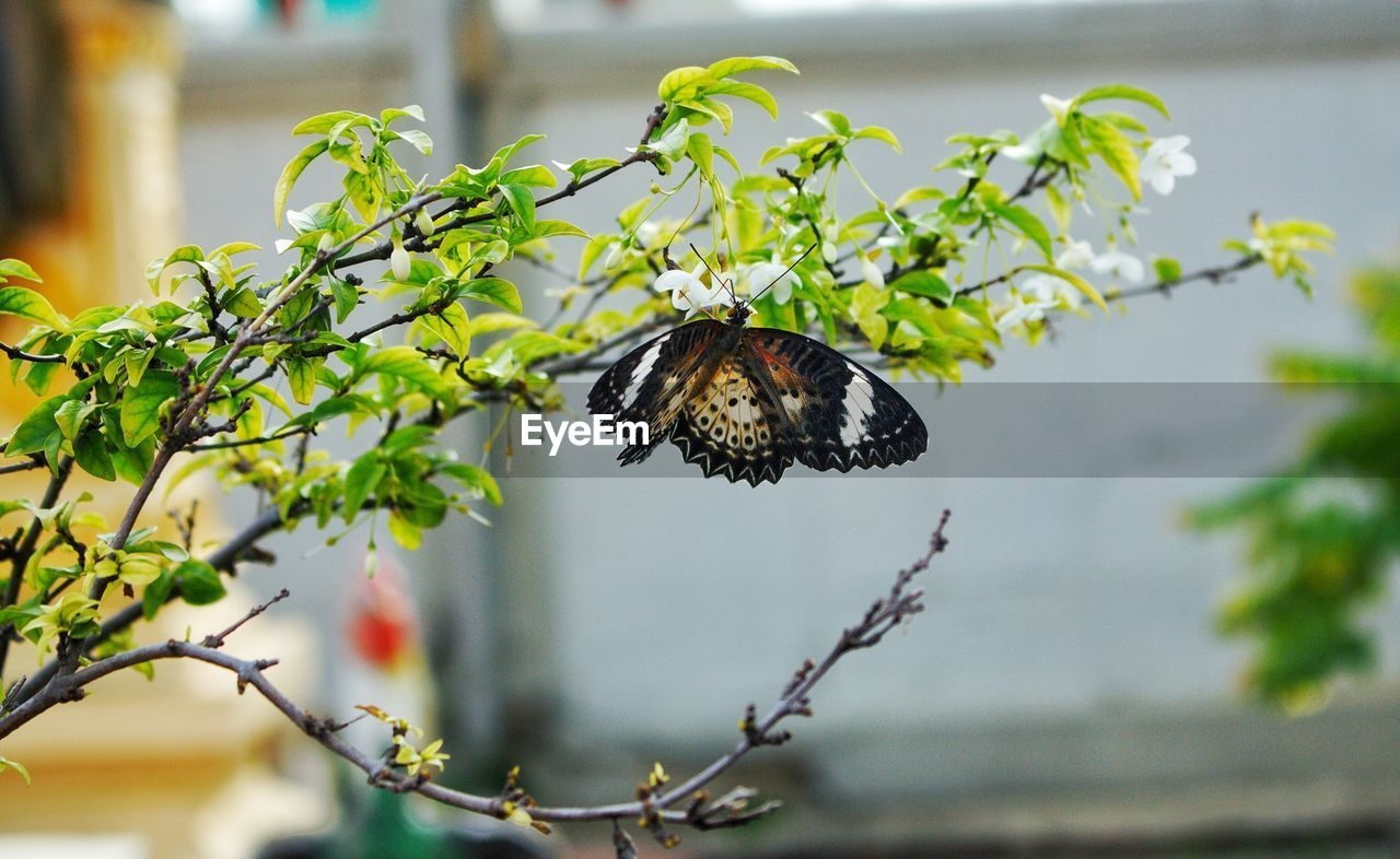 animal wildlife, animal themes, animals in the wild, invertebrate, animal, insect, one animal, plant, focus on foreground, close-up, beauty in nature, day, animal wing, flower, no people, butterfly - insect, growth, outdoors, nature, flowering plant, flower head, butterfly, pollination