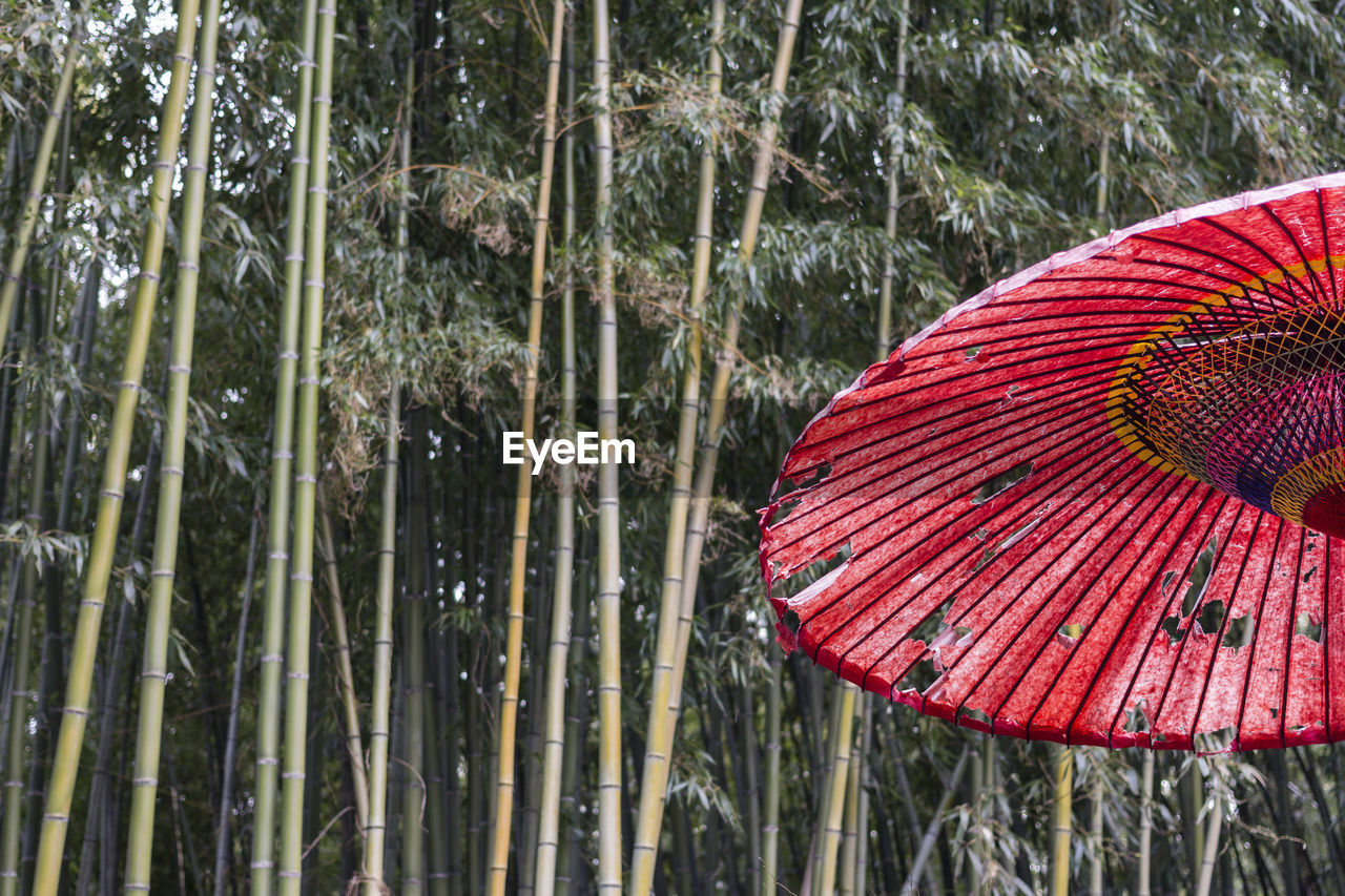protection, plant, umbrella, tree, security, nature, day, growth, water, outdoors, no people, focus on foreground, tranquility, beauty in nature, safety, forest, land, red, parasol, rain, bamboo - plant