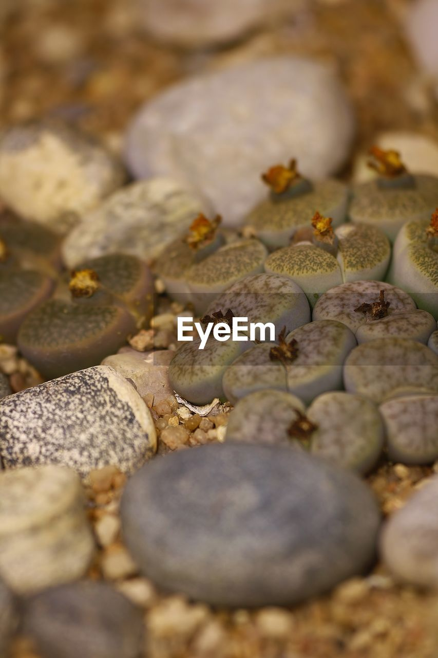 selective focus, pebble, no people, food and drink, close-up, large group of objects, full frame, food, day, outdoors, nature, pebble beach