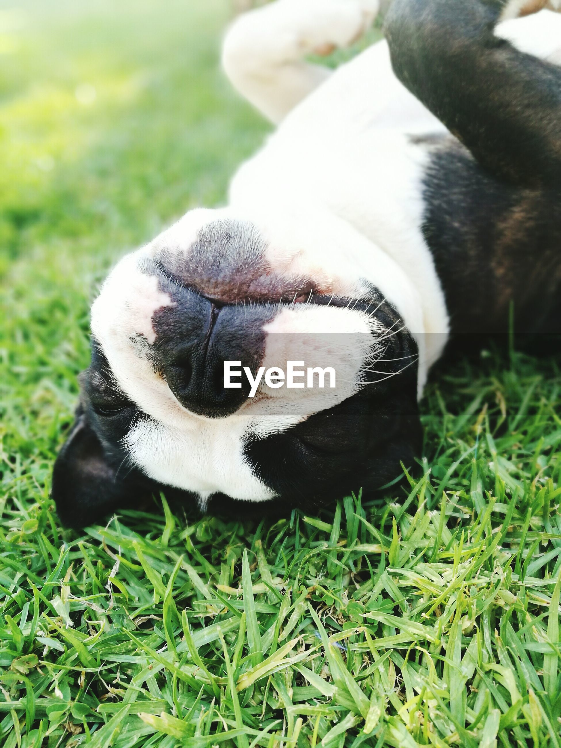 CLOSE-UP OF DOG WITH GRASS