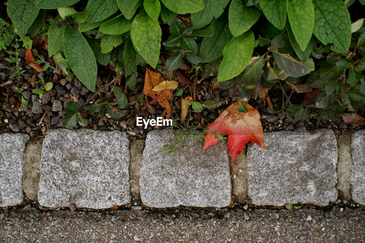 plant part, leaf, day, nature, no people, growth, plant, outdoors, close-up, beauty in nature, solid, red, green color, autumn, wall - building feature, land, food, wall, stone wall, rock, leaves