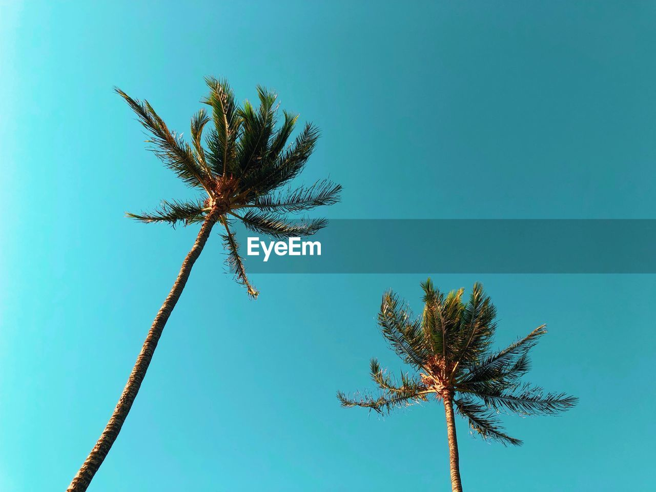 sky, plant, growth, tropical climate, low angle view, palm tree, nature, tree, no people, beauty in nature, day, clear sky, tranquility, tree trunk, trunk, blue, coconut palm tree, outdoors, tall - high, tropical tree, palm leaf, spiky