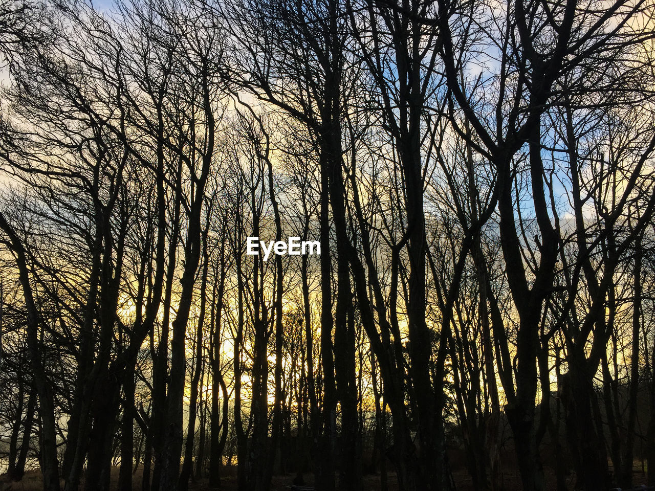 tree, bare tree, forest, tranquility, nature, tranquil scene, low angle view, outdoors, silhouette, beauty in nature, tree trunk, no people, branch, scenics, day, sky