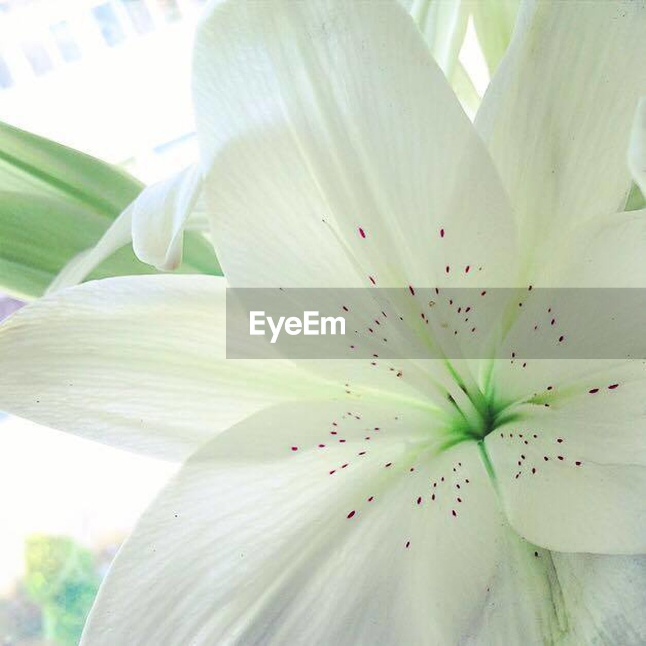 flower, freshness, petal, blossom, nature, stamen, beauty in nature, flower head, no people, springtime, close-up, plant, fragility, growth, day, leaf, beauty, outdoors