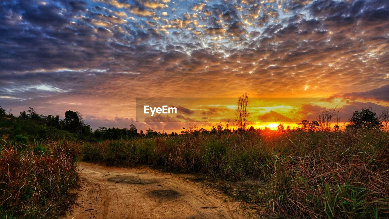 sky, sunset, cloud - sky, plant, beauty in nature, scenics - nature, tranquility, land, tranquil scene, field, nature, environment, growth, no people, landscape, orange color, grass, dramatic sky, non-urban scene, idyllic, outdoors