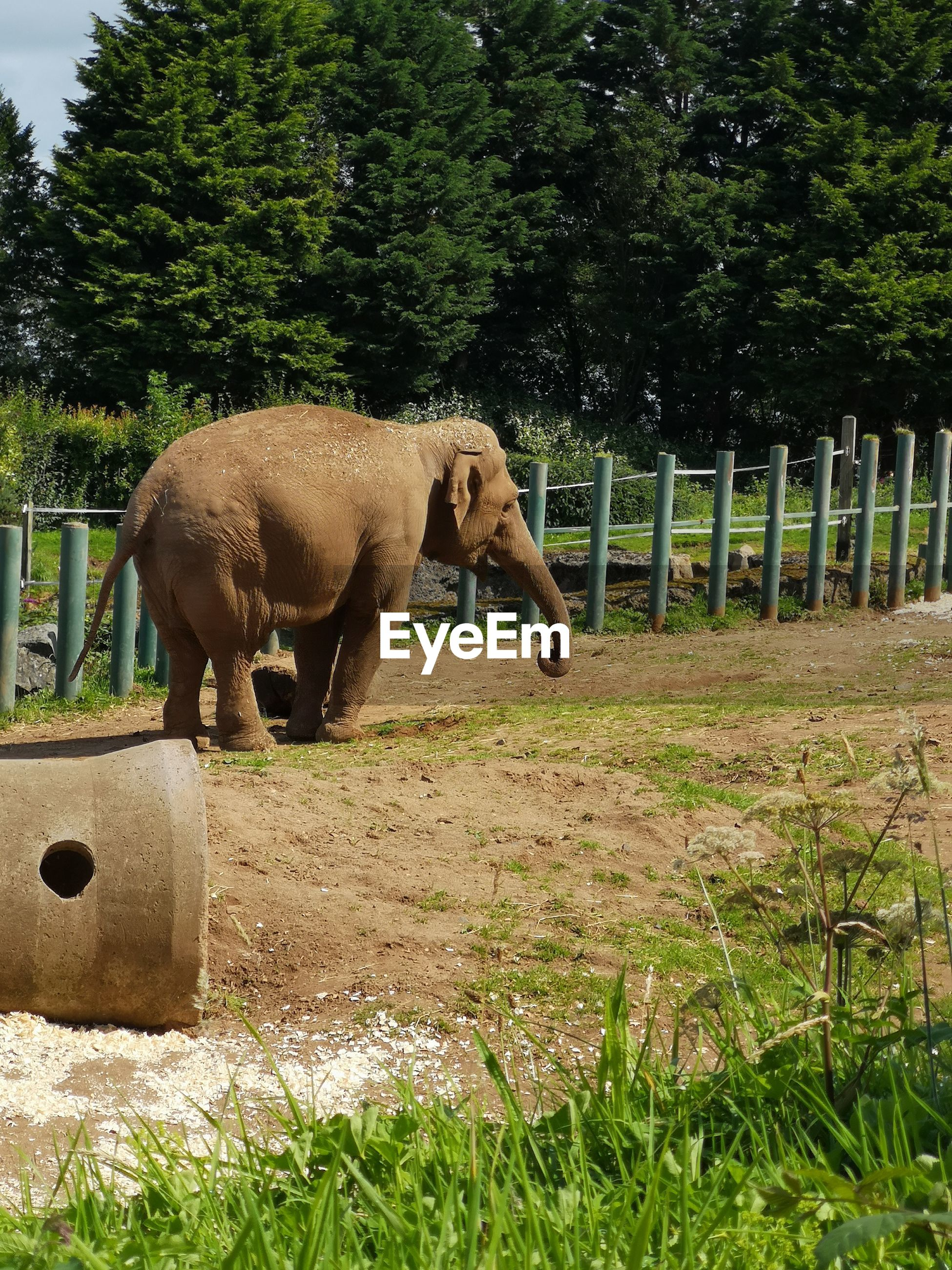 Elephant in belfast zoo